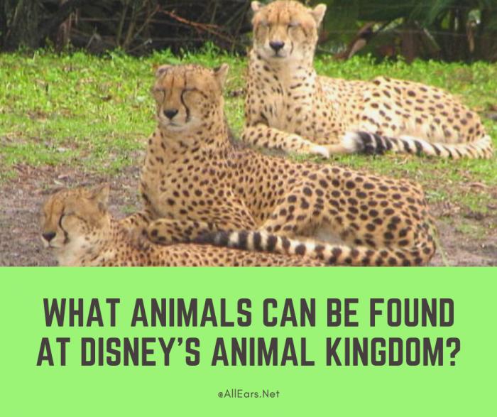 Animals at Animal Kingdom