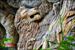 African Lion on Tree of Life