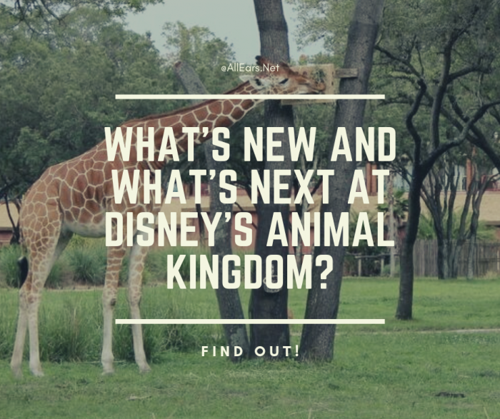 What's new and what's next at disney's animal kingdom_
