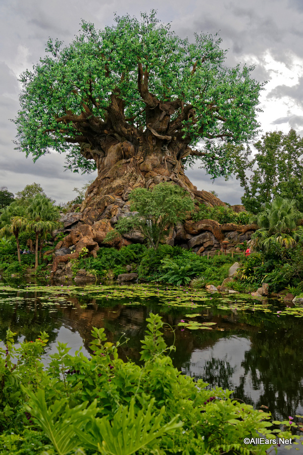 Did You Ever Notice These 5 Things In Disney S Animal Kingdom