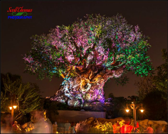 Tree of Life Awakenings Projection Show