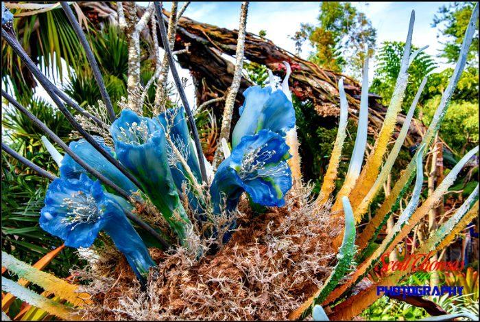 Pandora Flowers Landscape