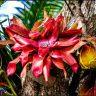 Pandora Red Flower