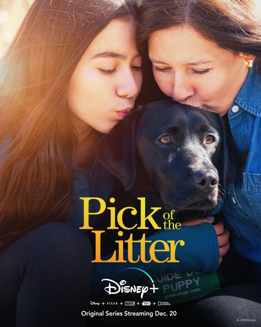 "Cute Overload! New Disney+ Original Series ""Pick of the Litter"" Starts Streaming Soon! - AllEars.Net"