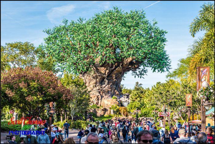 Tree of Life at 70mm