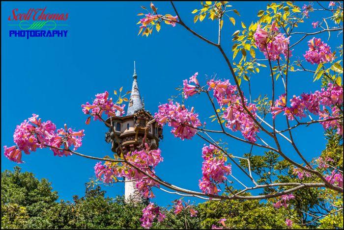 My Walt Disney World flickr Album - AllEars.Net