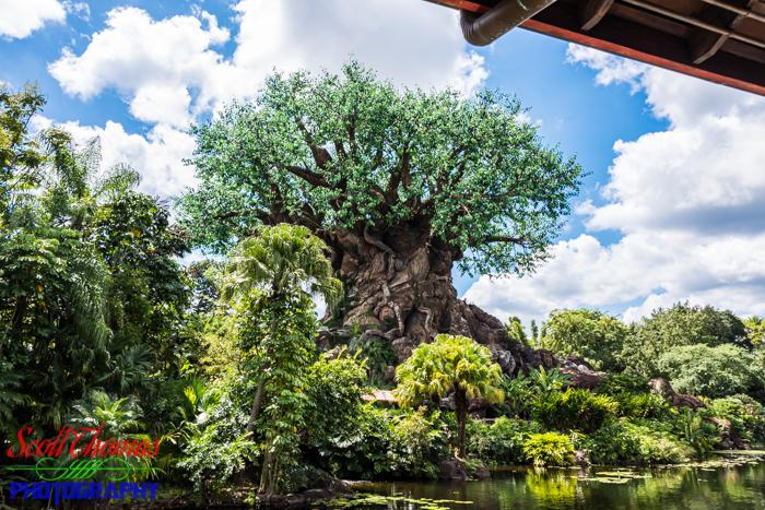 Tree of Life Backside