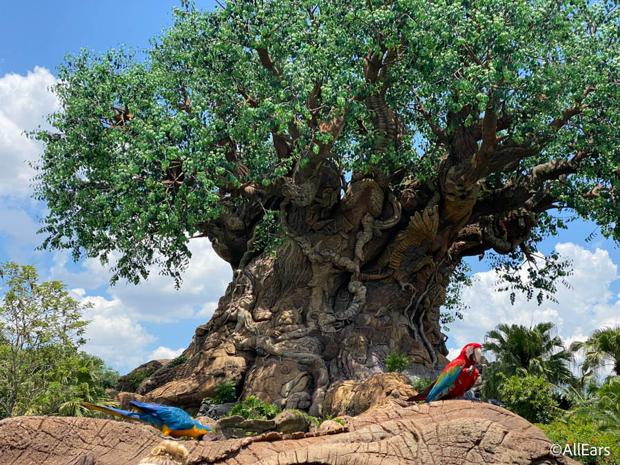 Disney's Animal Kingdom Had the Highest Wait Time Again Today! - AllEars.Net