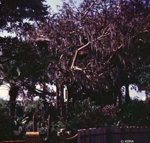 1973-adv.jpg