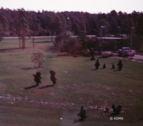 1973-topiaries.jpg