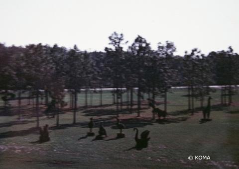 1973-topiary.jpg