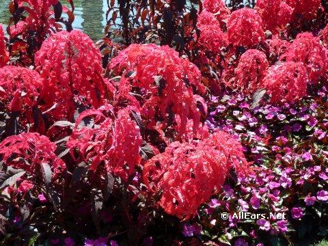flower-garden-3.jpg