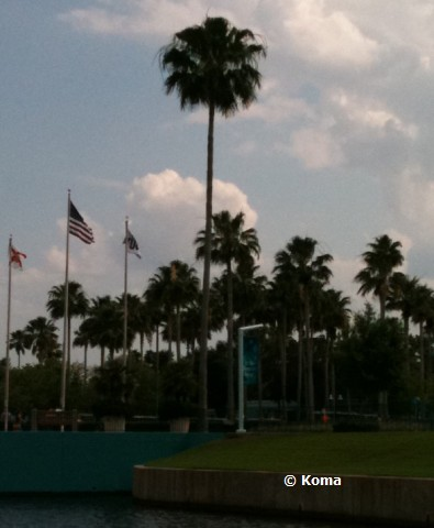 palm-trees-at-hollywood-studios.jpg