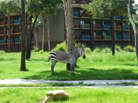 zebra-at-kidani-village.jpg