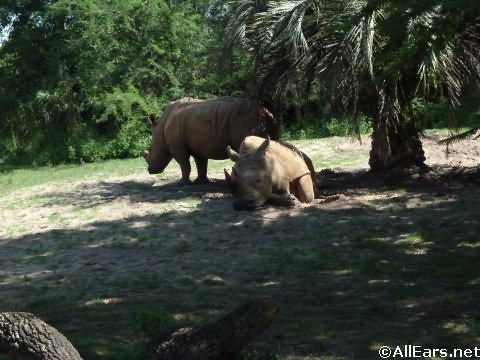 Animal Kingdom White Rhino