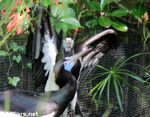 Animal Kingdom Abdim Stork