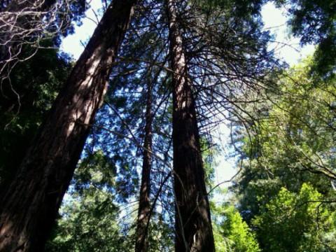 deb-wills-muir-woods.jpg