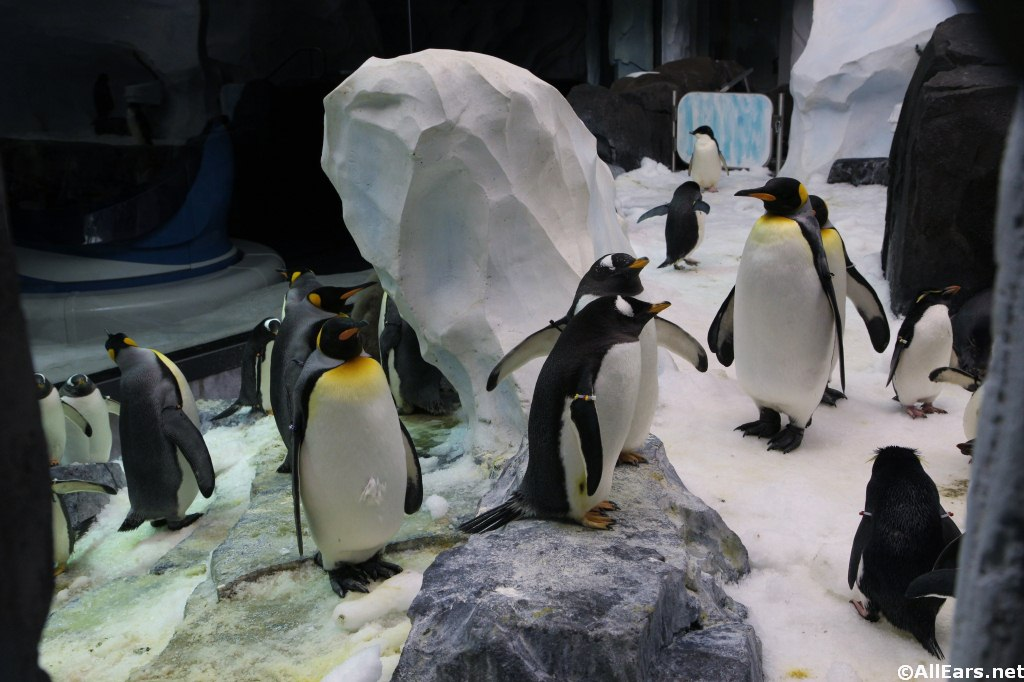 SeaWorld's Penguin Up Close Tour