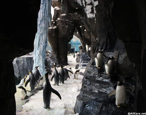 penguin-up-close-tour-4.JPG