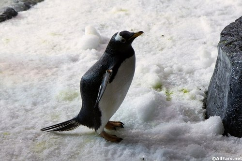 penguin-up-close-tour-7.JPG