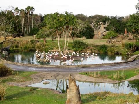 Savor the Savanna Experience - Animal Kingdom