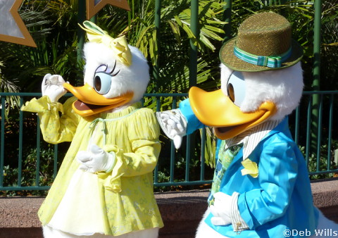 Donald and Daisy's new Costume at Disney's Hollywood Studios