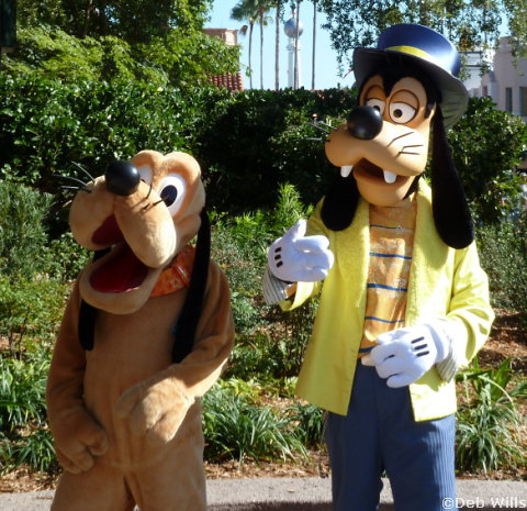 Pluto and Goofy's new Costumes at Disney's Hollywood Studios