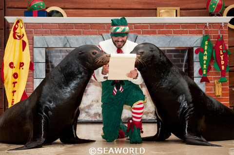 SeaWorld's Christmas Celebrations