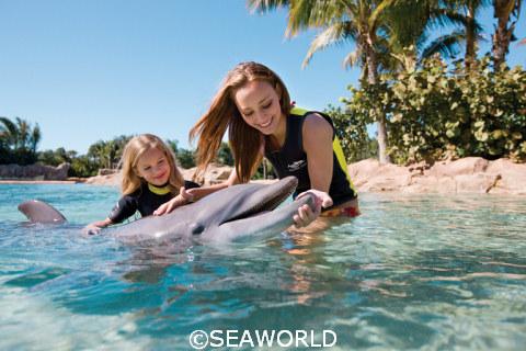 SeaWorld Dolphin Interation