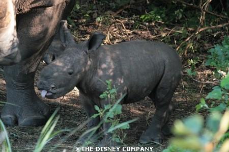 Ziwa_Rhino_Sanctuary1.jpg