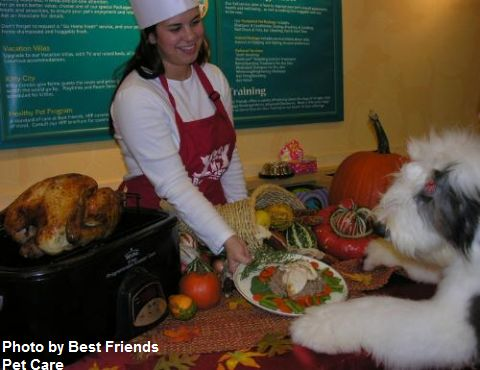 Disney and florida attractions news blog best friends pet for Pet boarding near disney world