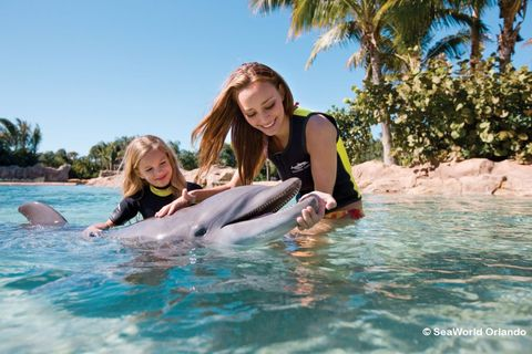 discovery-cove-dolphins.jpg
