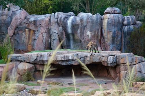 hyenas-3.jpg