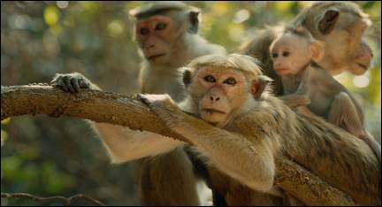 monkey-kingdom-1.jpg