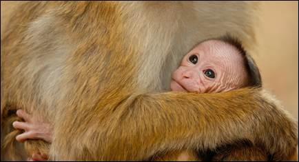 monkey-kingdom-2.jpg