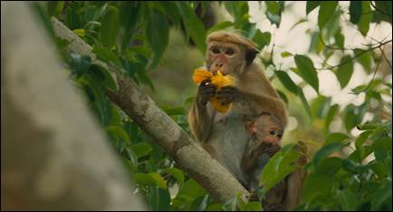 monkey-kingdom-3.jpg