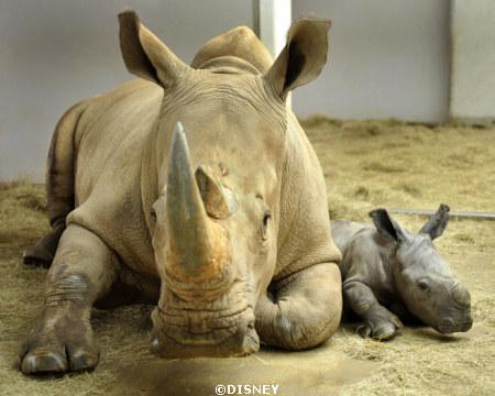 rhinobaby.jpg