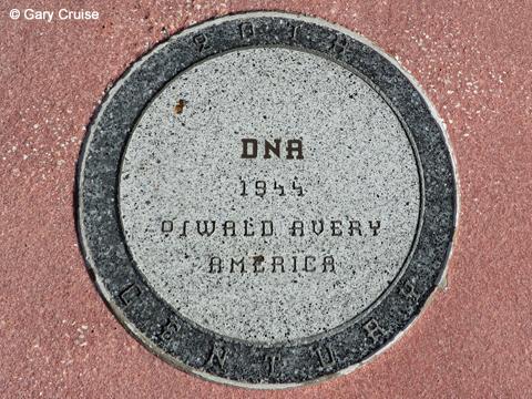 20th Century DNA