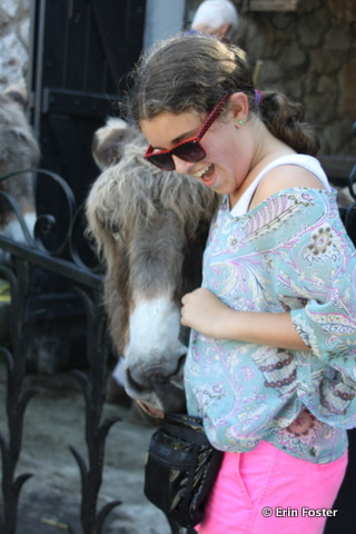 Eze-donkey.jpg