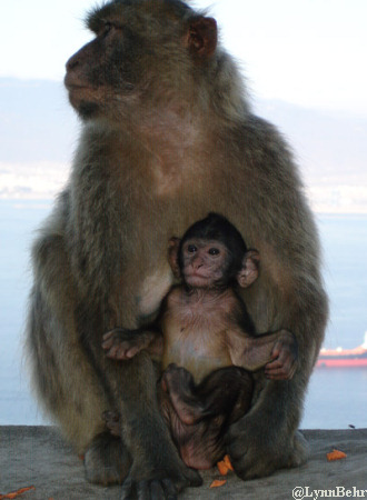 Ape and Baby