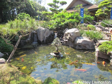 Japan garden