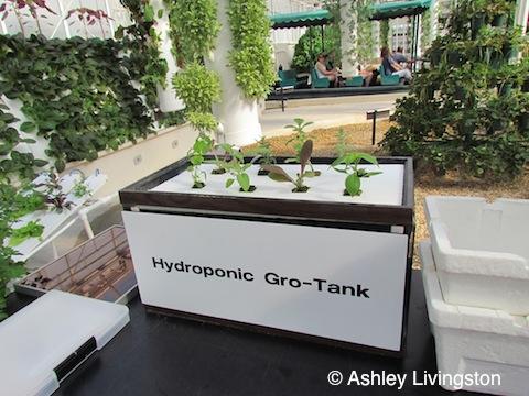 Hyrdroponic