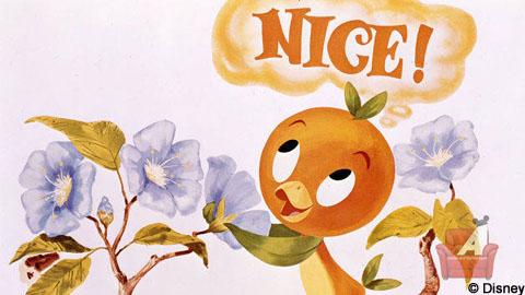 Orange Bird Nice