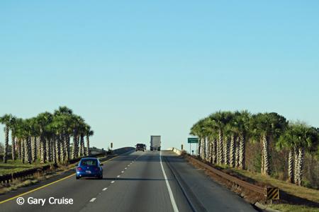 Palm%20Trees.jpg