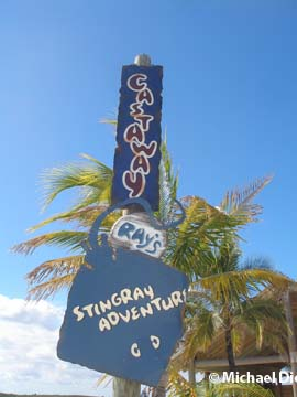 Castaway Ray's Stingray Adventure - Castaway Cay - Disney Cruise Line