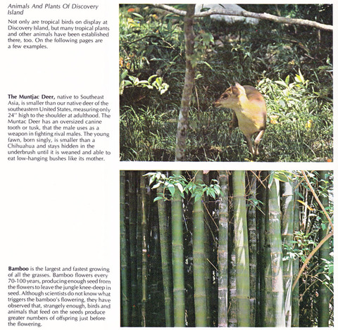 Animals and plants of Discovery Island