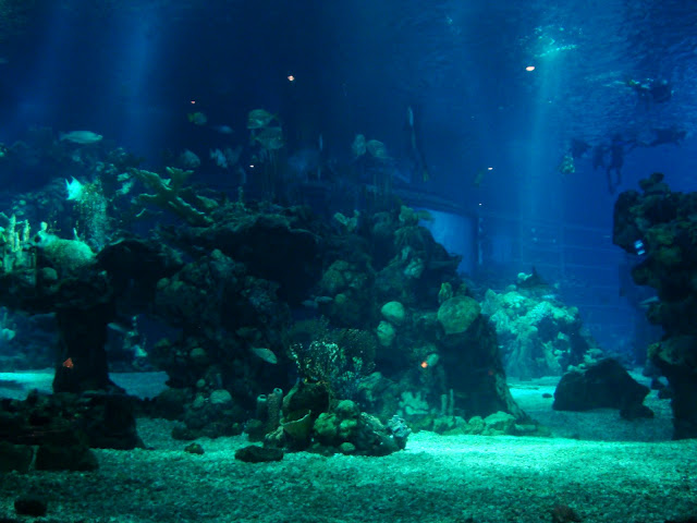 Dining Under The Sea At The Coral Reef Restaurant All