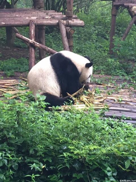china-abd-20.jpg
