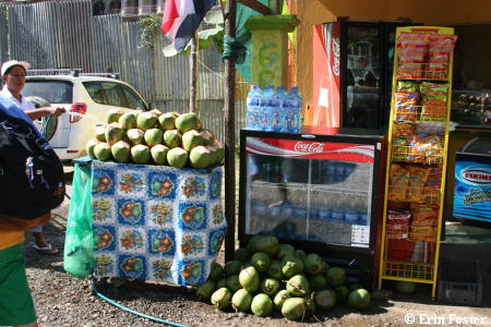 Coconut Stand