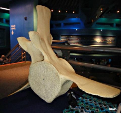 disney-whale-vertabrae.jpg